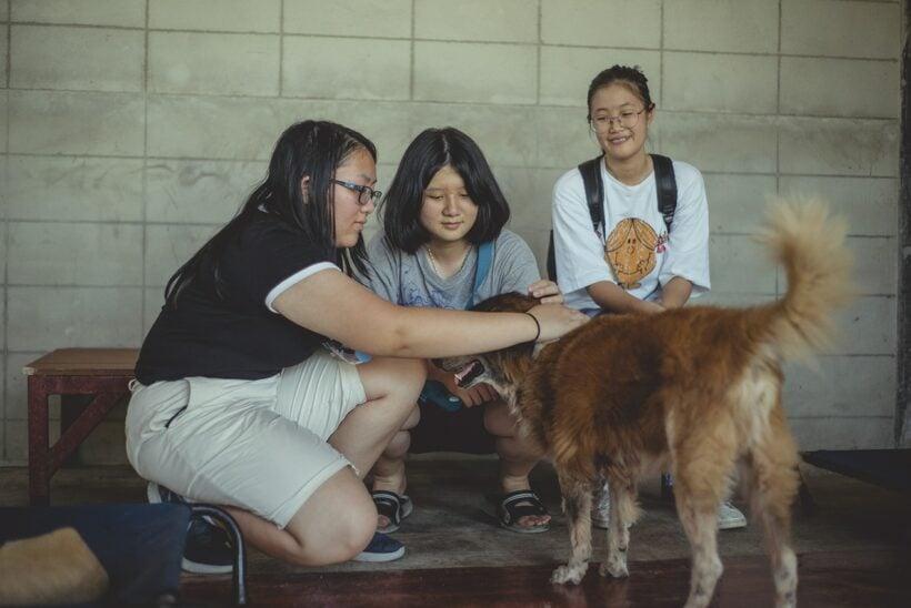 เริ่มต้นวันหยุดสุดสัปดาห์นี้ด้วยกิจกรรมดีๆ อย่างการไปเยี่ยมชมมูลนิธิเพื่อสุนัขในซอย | The Thaiger