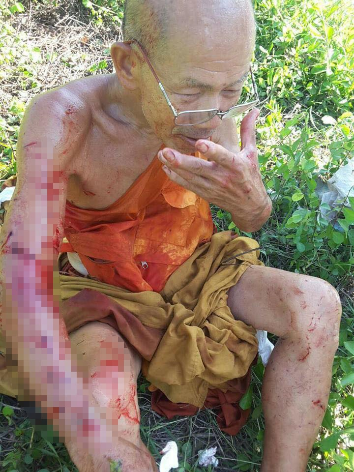 Seven pit bull dogs attack Monk | News by The Thaiger
