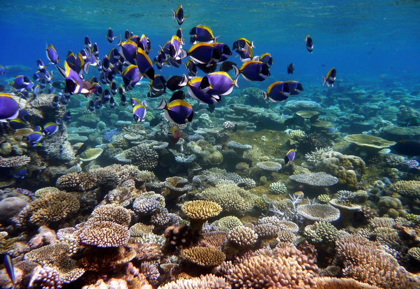 UPDATE: Coral bleaching around Thailand waters | The Thaiger