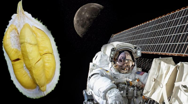Durian being sent into space. Yes, really. | Thaiger