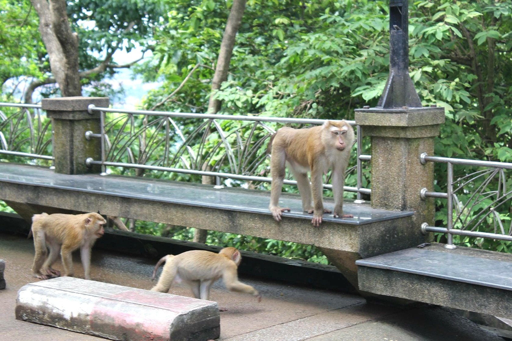 900,000 baht to move 'some' monkeys | The Thaiger