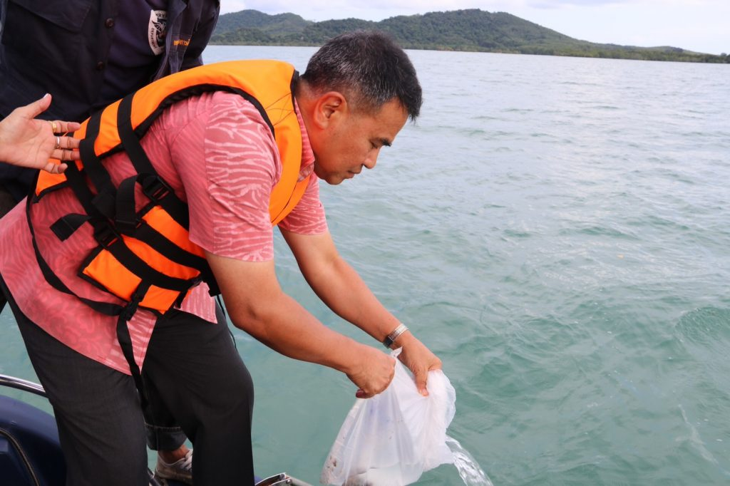 Paklok community release new marine life to counter over-fishing in the region | News by Thaiger