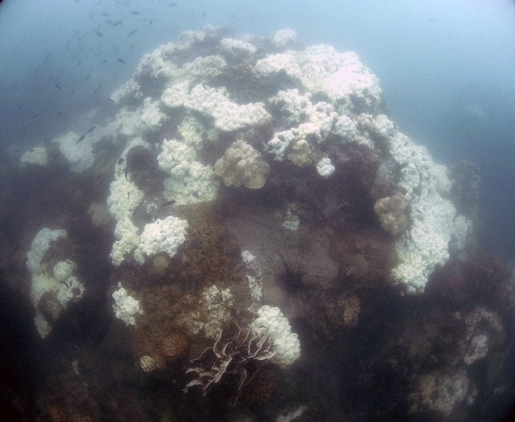 UPDATE: Coral bleaching around Thailand waters   News by Thaiger