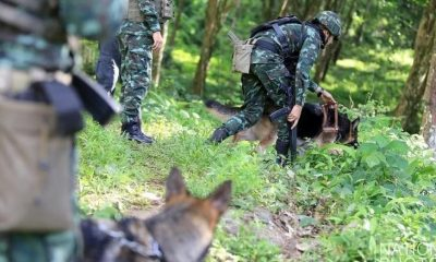 Chiang Rai: 650 personnel now involved in the search | The Thaiger