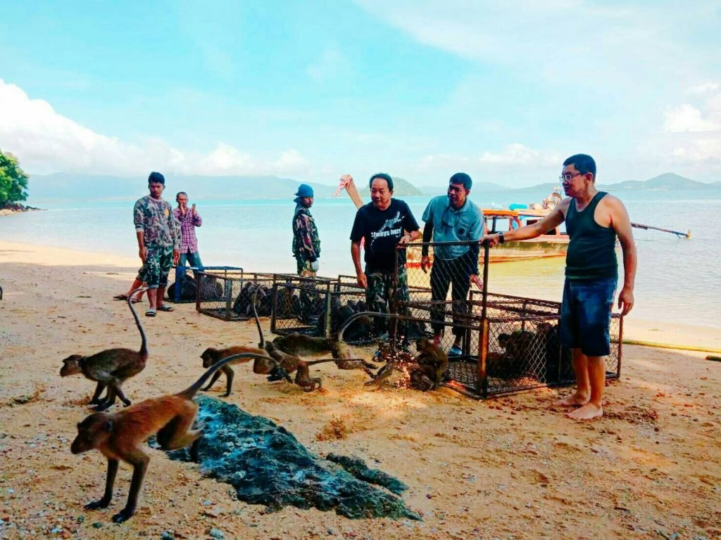 Monkeys released at Koh Payu - video and photos | News by Thaiger
