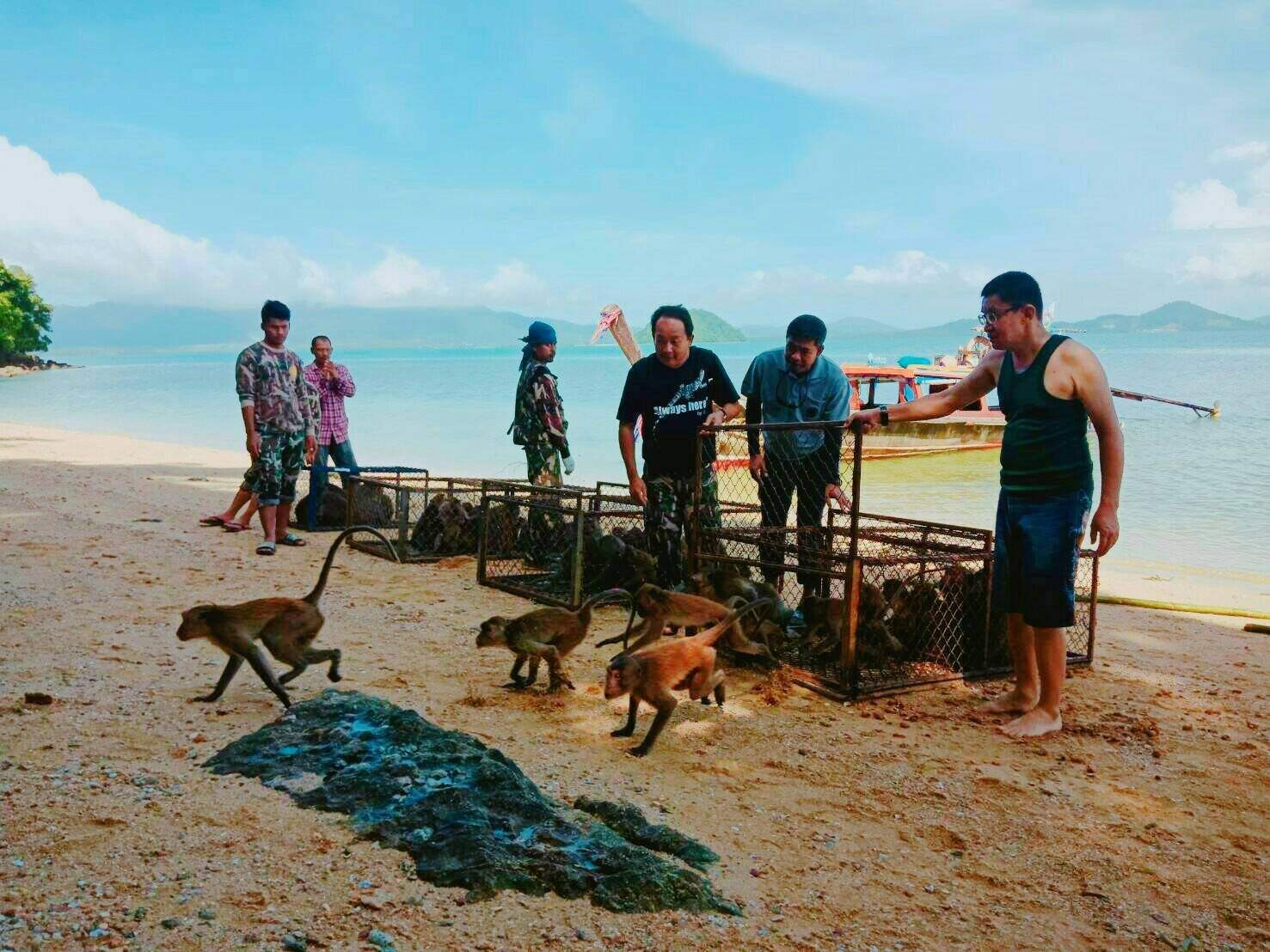 Monkeys released at Koh Payu – video and photos | The Thaiger