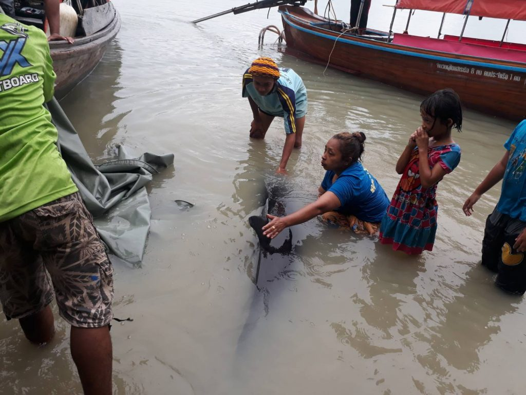 Dead sperm whale found off Phuket under investigation | News by The Thaiger