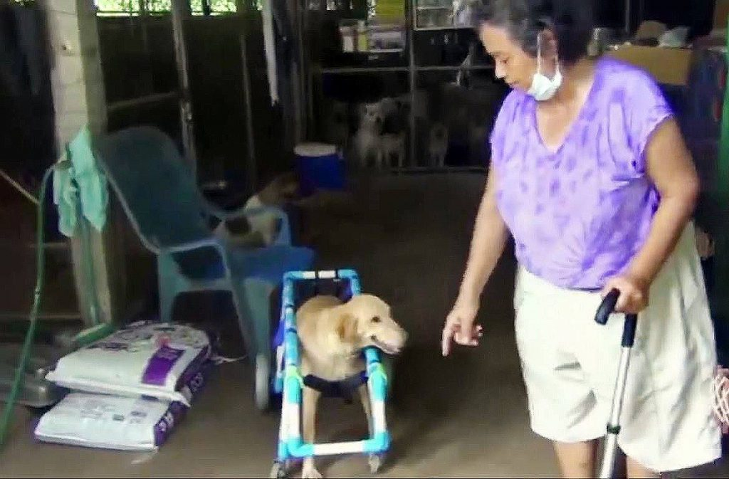Help on the way for Lampang woman who cares for 400 stray dogs | News by The Thaiger