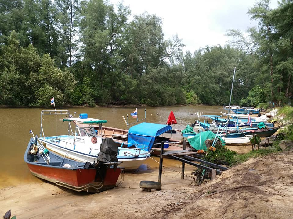 Officials investigating alleged encroachment in a Layan mangrove | The Thaiger