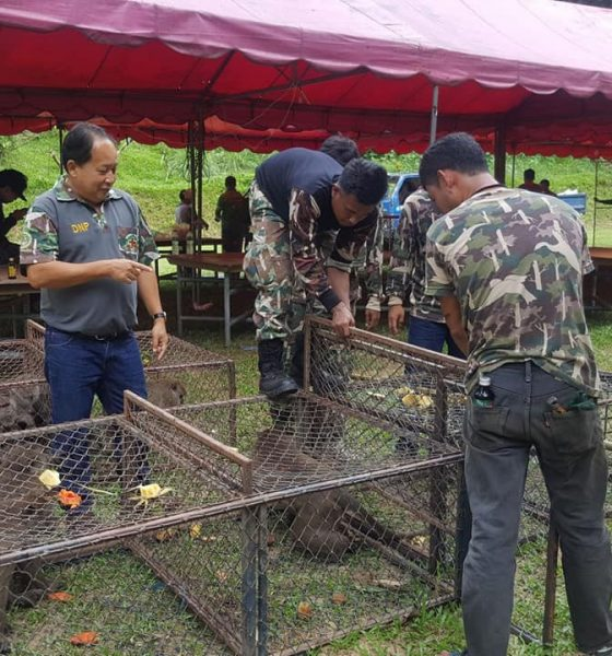 48 long-tailed macaques caught for sterilisation in Paklok | The Thaiger
