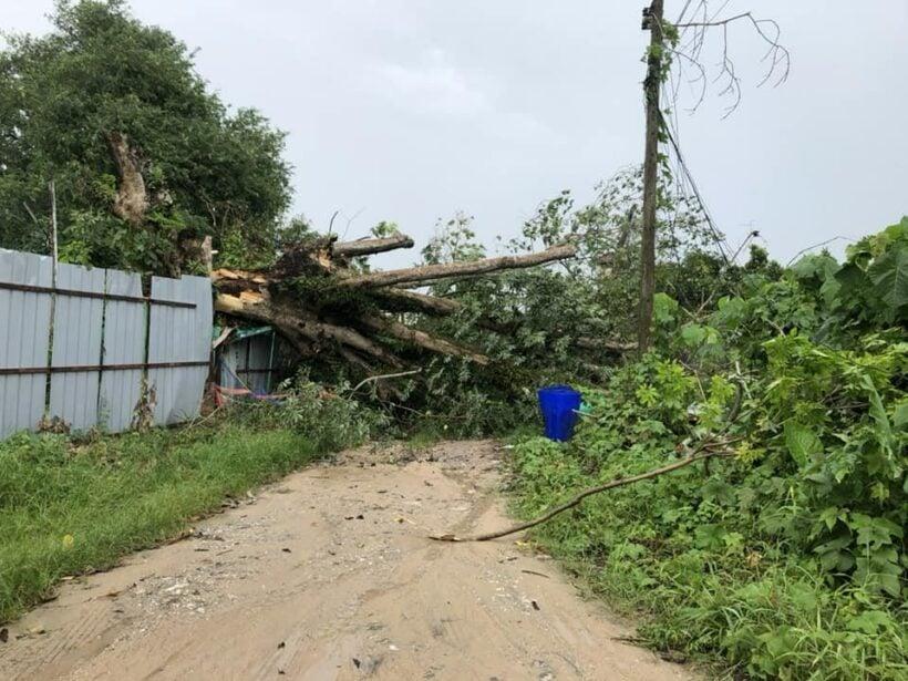 พายุฝนกระหน่ำภูเก็ต พัดต้นไม้ใหญ่ล้มทับบ้านเรือนประชาชนและขวางถนนหลายจุด | News by The Thaiger