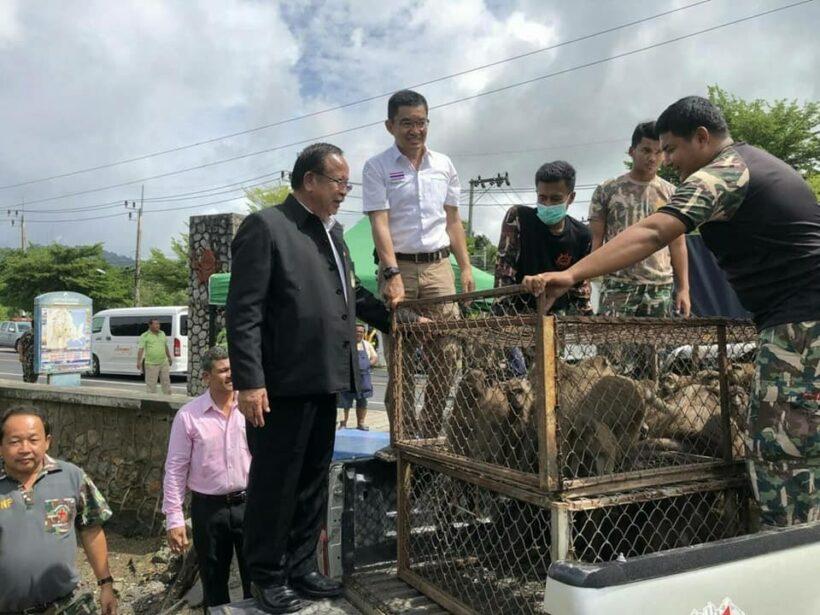 41 more sterilised monkeys released back on Koh Sirey | News by Thaiger