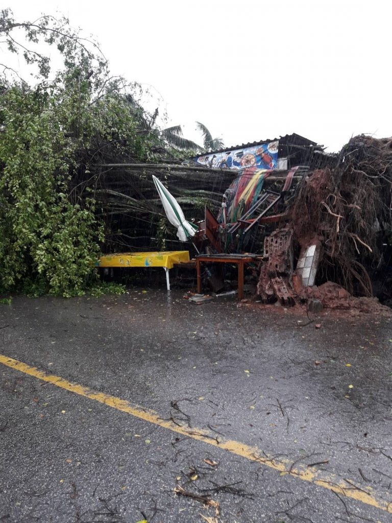 Phuket storm tears down trees and power poles | News by The Thaiger