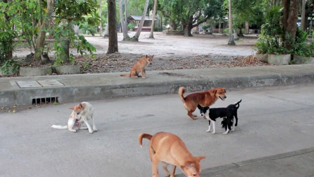 Rabies confined to one puppy in Prachuap Khiri Khan | The Thaiger