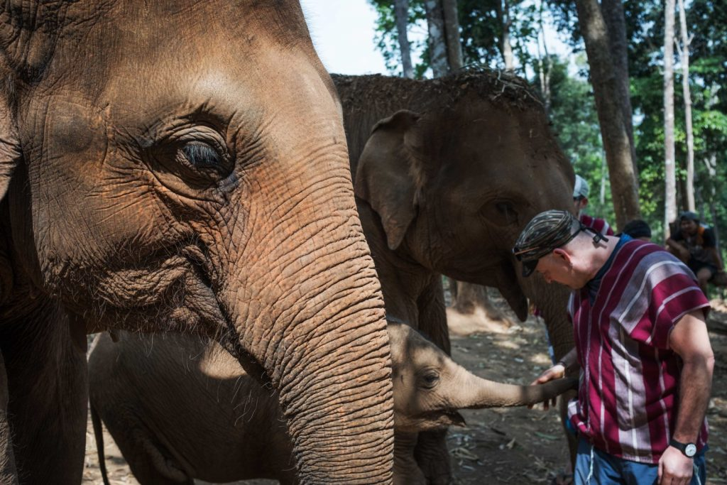 Visiting the Elephant Sanctuary Park in Chiang Mai | News by The Thaiger