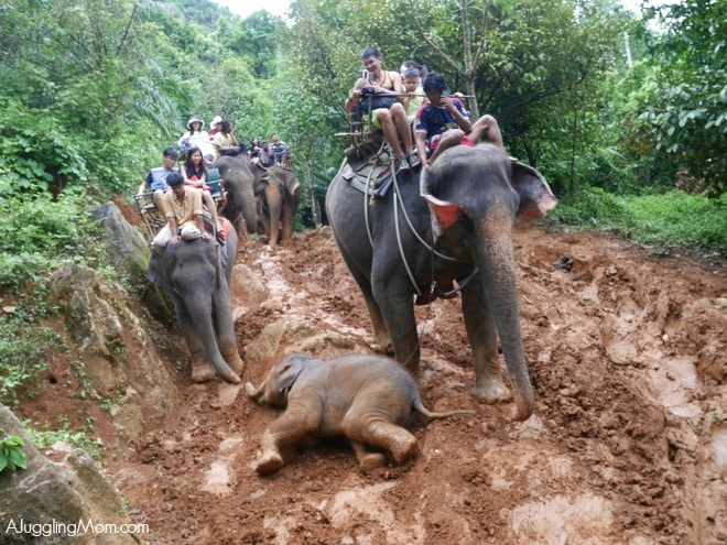 Krabi elephants reporting for treatment at animal hospital | News by The Thaiger