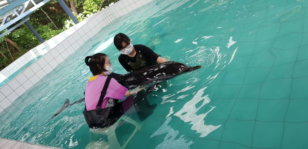 Mother and baby dolphin found off Phuket | News by The Thaiger