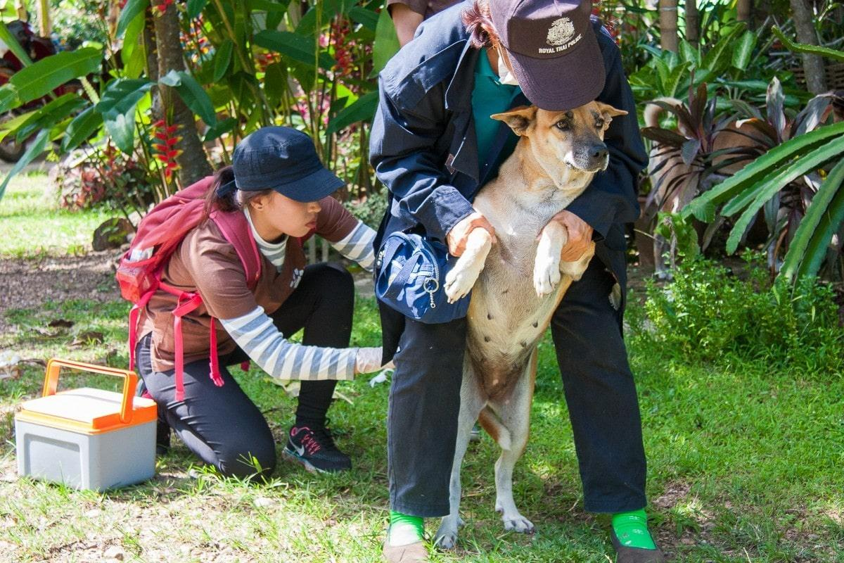 Chiang Mai: Mission 'Rabies' | The Thaiger