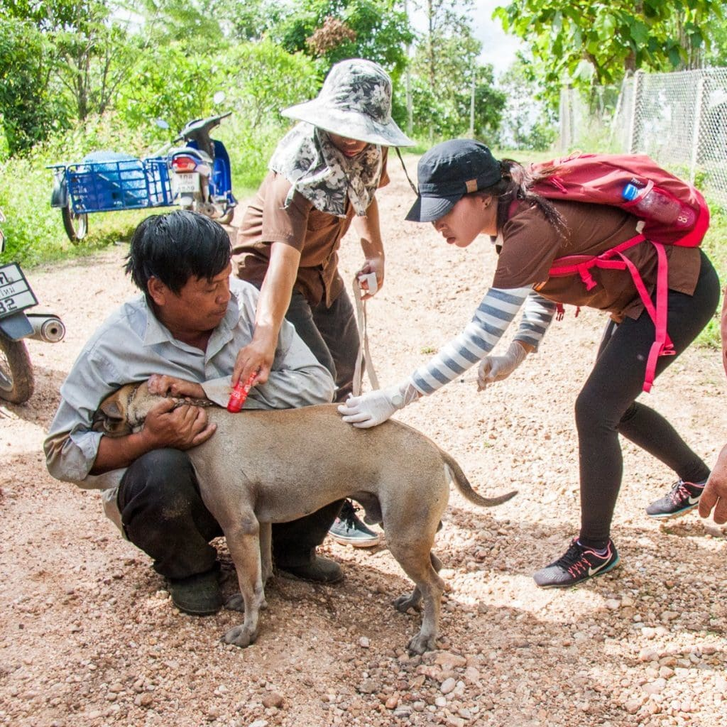 Chiang Mai: Mission 'Rabies' | News by The Thaiger