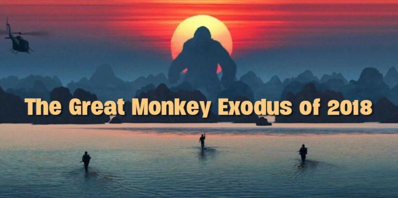 Great Phuket Monkey Exodus of 2018: 37 more monkeys captured in Rassada | The Thaiger