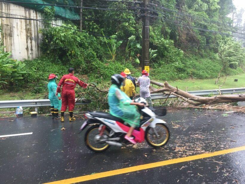 พายุฝนกระหน่ำภูเก็ต พัดต้นไม้ใหญ่ล้มทับบ้านเรือนประชาชนและขวางถนนหลายจุด | The Thaiger