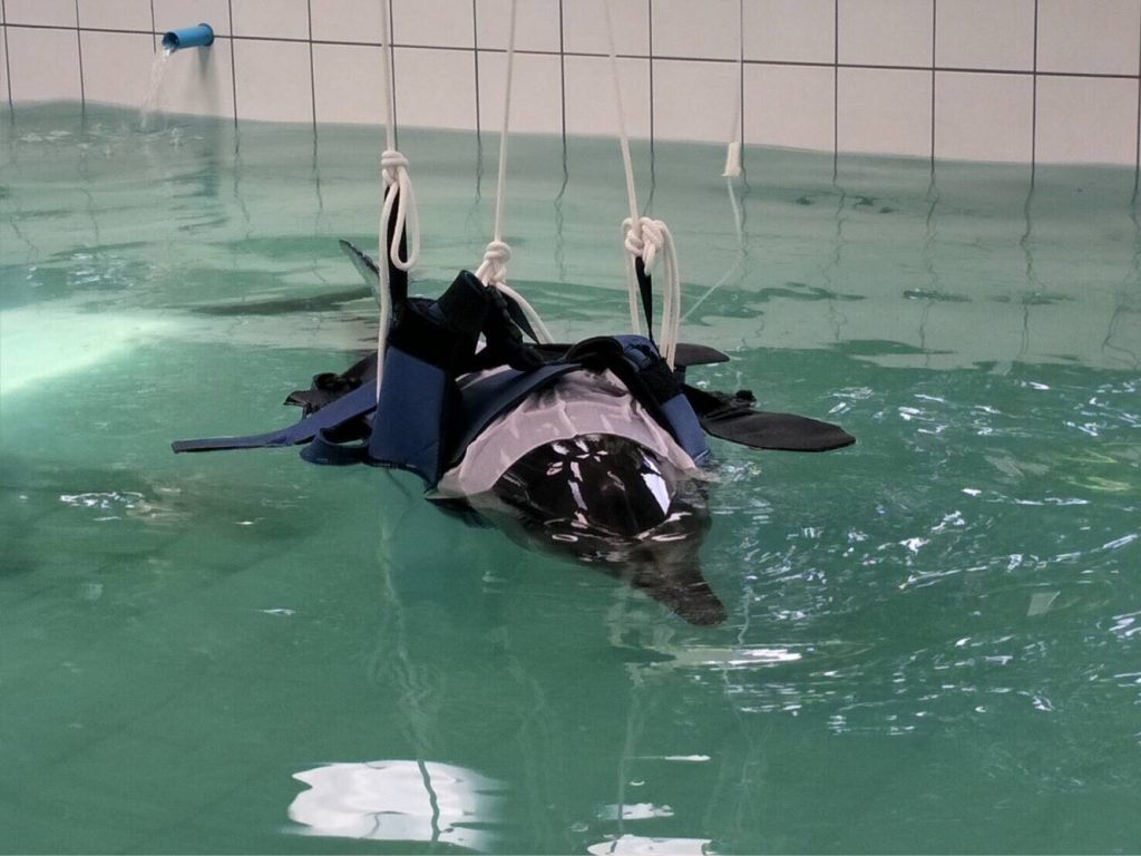 Veterinarians unable to save striped dolphin | News by The Thaiger