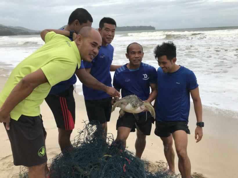 คลื่นลมแรง ซัดเต่าทะเลเกยตื้น 3 ตัว ชาวบ้านเร่งช่วยเหลือ ก่อนแจ้งเจ้าหน้าที่มารับตัว | The Thaiger