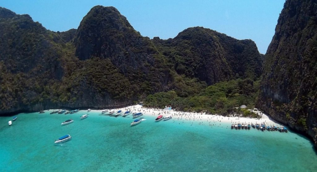 Coral planted in Maya Bay | News by The Thaiger