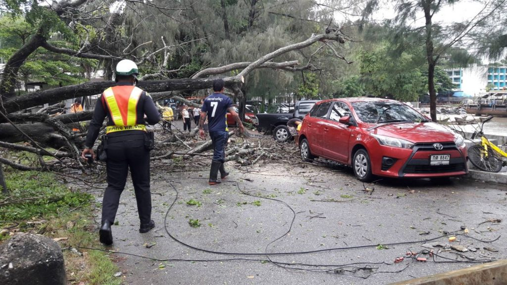 Strong winds bring down trees and power poles, two cars damaged | News by Thaiger