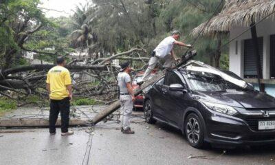 ภูเก็ตฝนตกลมกรรโชกแรงต้นไม้ขนาดใหญ่เสาไฟฟ้าล้มทับรถยนต์เสียหาย 2 คัน   The Thaiger