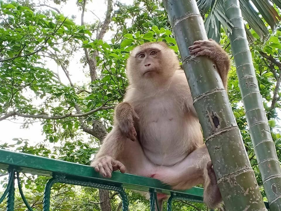 Koh Payu monkeys get a seafood feast | News by Thaiger