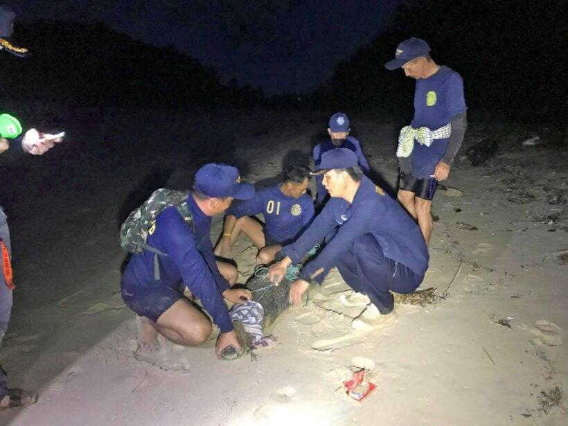 Gotcha! Phuket's crocodile caught at Layan Beach | The Thaiger
