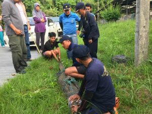 Gotcha! Phuket's crocodile caught at Layan Beach | News by The Thaiger