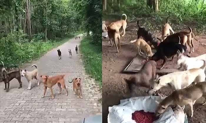 Chiang Mai: Stray dog problem around dams overwhelming volunteers | The Thaiger