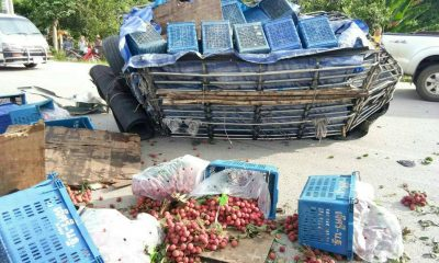 Chiang Mai: High speed crash results in a roadside lychee salad | The Thaiger