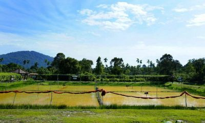 Great southern comforts – Narathiwat | The Thaiger