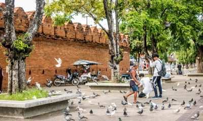 Chiang Mai: Don't feed the pigeons | The Thaiger