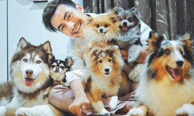 แช๊ะ เปลี่ยน ชีวิต งานประกวดภาพถ่ายสุนัขจรจัดที่น่ารักน่าเลี้ยง | The Thaiger