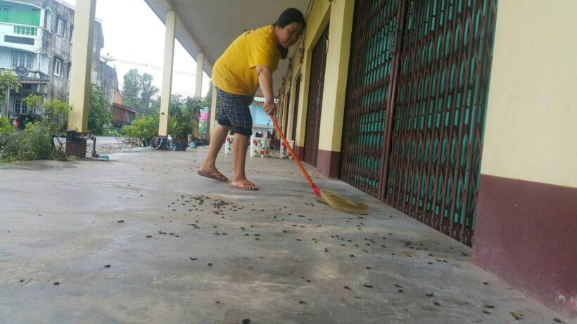 Krabi millipede invasion | The Thaiger