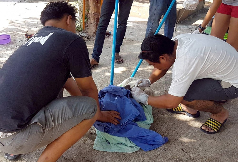 Korat dog gets shot with an arrow | The Thaiger