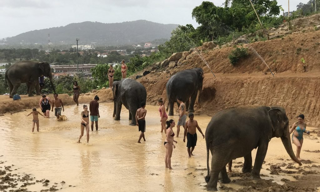 Return to Elephant Jungle Sanctuary | News by The Thaiger