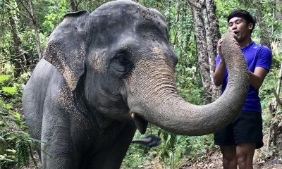 Return to Elephant Jungle Sanctuary | The Thaiger
