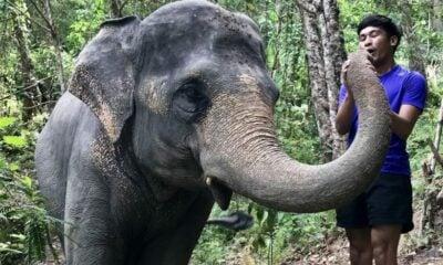 Return to Elephant Jungle Sanctuary | The Thaiger