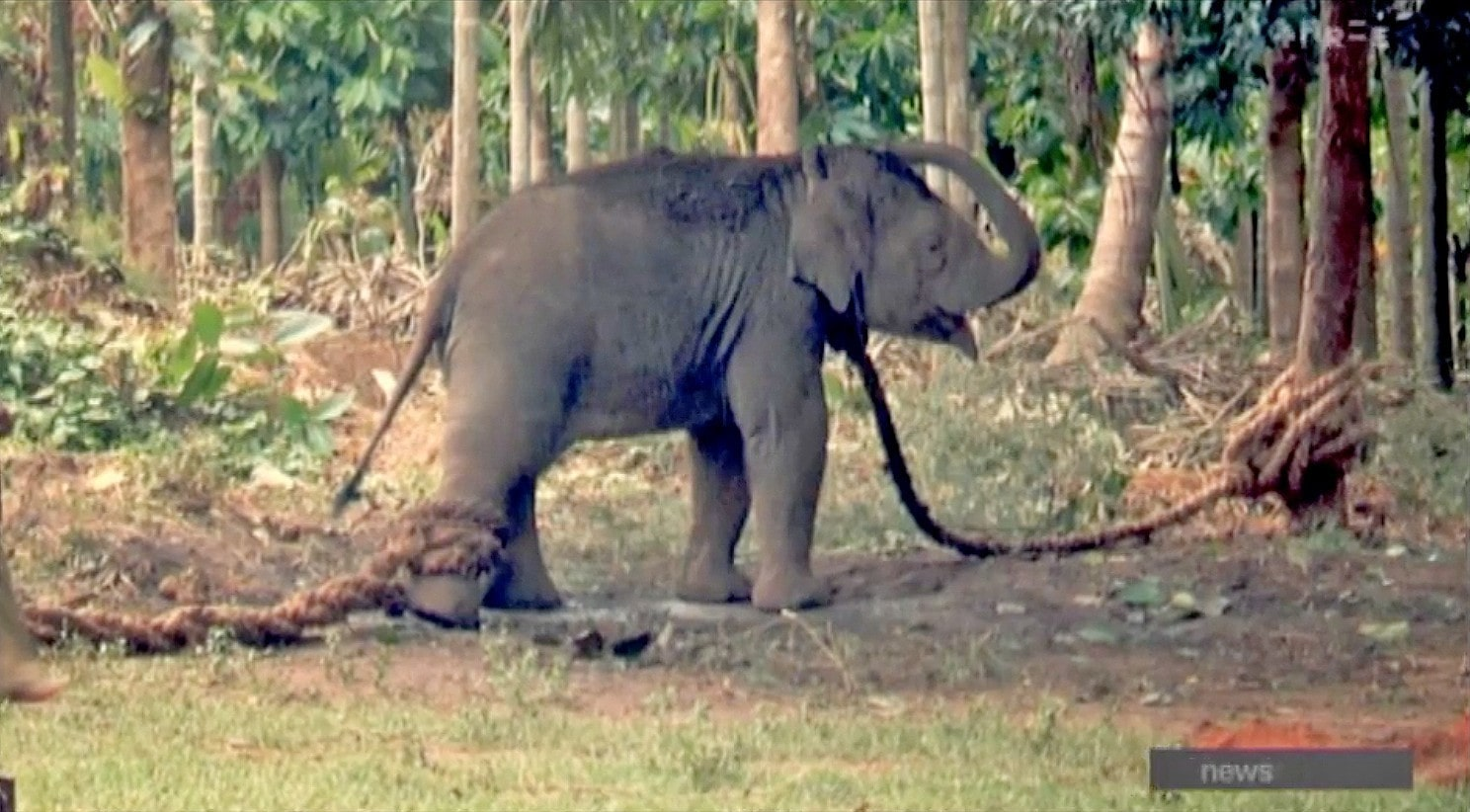 Don't ride elephants in Thailand – warning to Kiwi tourists | The Thaiger