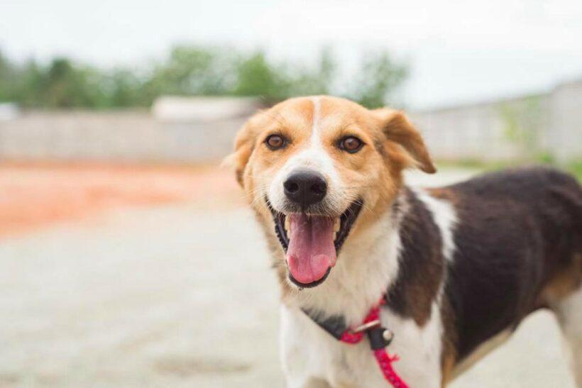 แช๊ะ เปลี่ยน ชีวิต งานประกวดภาพถ่ายสุนัขจรจัดที่น่ารักน่าเลี้ยง   News by The Thaiger