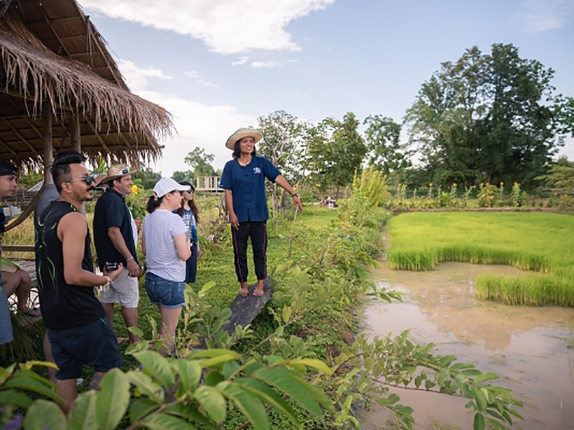 Mango Tree hosts educational tour to train global chefs in the art of Isan cuisine   News by The Thaiger
