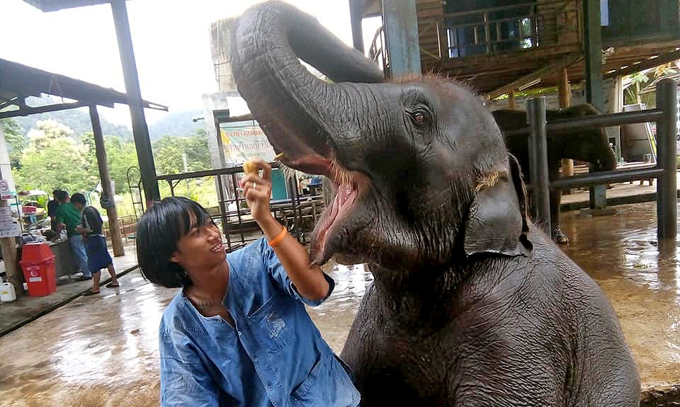 The world's first mahout training school opens in Chiang Mai | The Thaiger