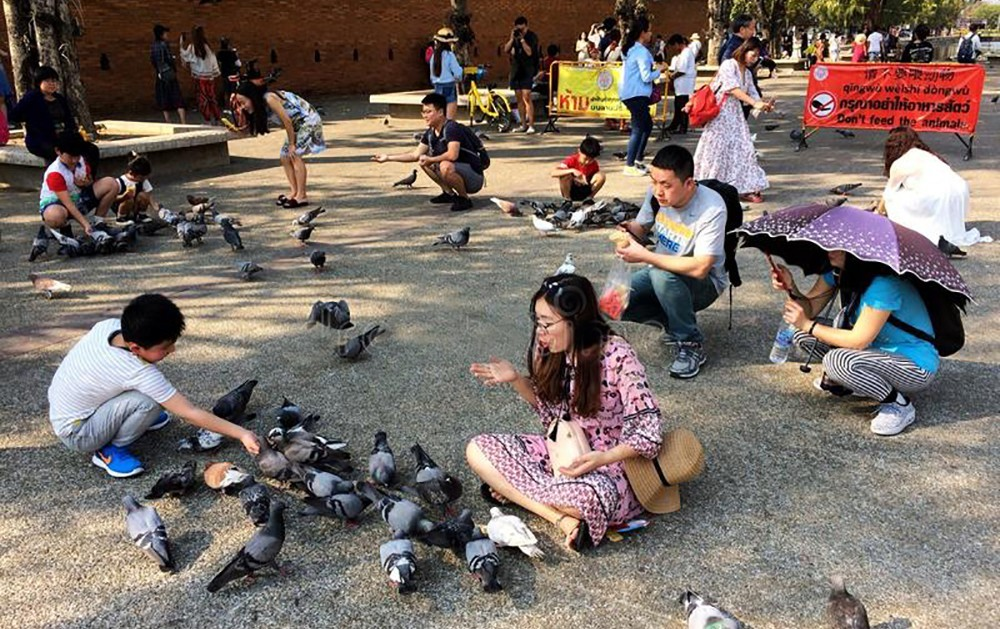 Illegal bird feed vendors arrested at Tha Pae Gate, Chiang Mai. | The Thaiger