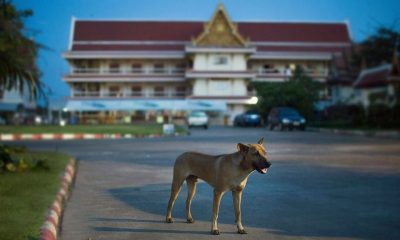 Tak woman is 16th rabies death this year | The Thaiger