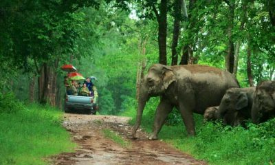 Natural alternative to elephant tourism in Prachuap Khiri Khan | The Thaiger
